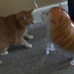 video de chat ballon drole