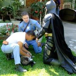 Un chat sauvé par Batman et Captain America