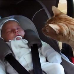 un chat rencontre un bébé