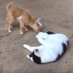 chat cam dz elle se masturbe au boulot