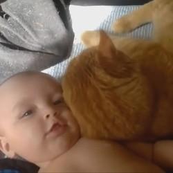 un chat et un bébé