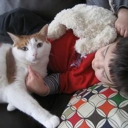 chat bébé enfant