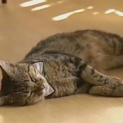 un chat bibliothécaire