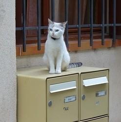 chat boîte aux lettres