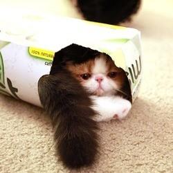 video de chat dans une boite marue