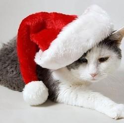 idées cadeaux de noël accessoires pour chat