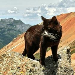 chat aventurier