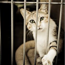 chat cage refuge