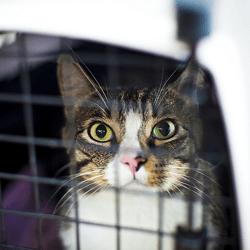 chat cage de transport