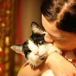 Les chats s'imposent dans le coeur des Français