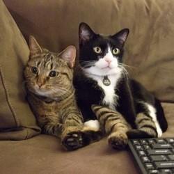 chats sur un canapé