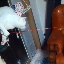 un chat joue tout seul avec une canne à pêche