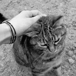 chat caresse