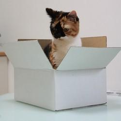 un chat dans une boîte en carton