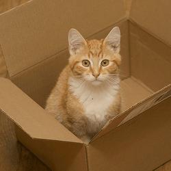 chat carton déménagement