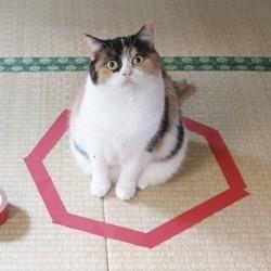 chat dans un cercle