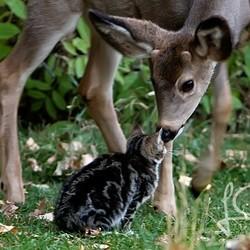 un chat et des cerfs