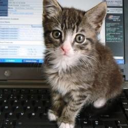 chat cerveau ordinateur