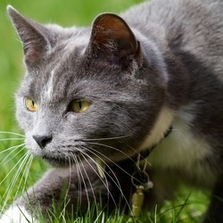 chat nouvelle zélande