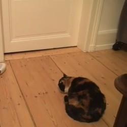 un chat attaqué par une chaussette de bébé