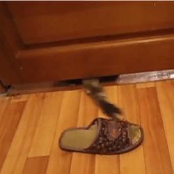 un chat vole des chaussons