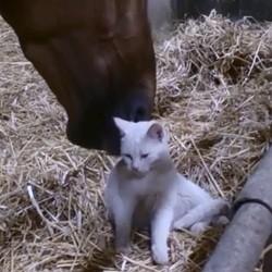 un chat et un cheval se font un câlin
