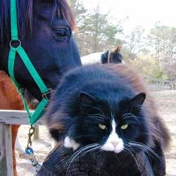 chat et cheval videos animaux
