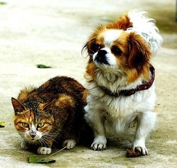 interdiction de manger du chat et du chien en Chine