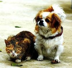 interdiction de manger du chat et du chien en Chine
