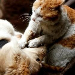 chat contre chien animal de compagnie préféré