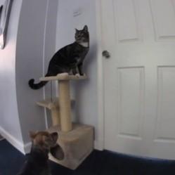 un chat et un chien s'évadent