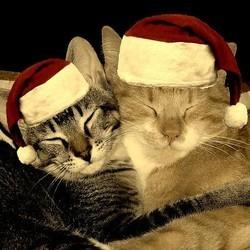 chat chien animaux cadeau de noel