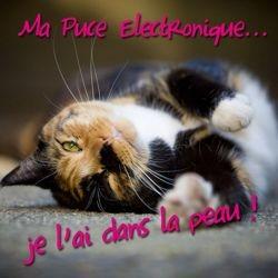 puce electronique obligatoire tatouage chien chat