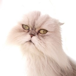 chien chat sixieme sens etude
