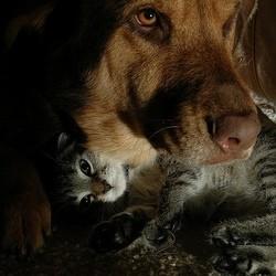 un chat et un chien blottis