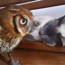 un chat et une chouette