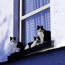Mon chat est tomb du balcon au secours soigner son for Fenetre qui se transforme en balcon