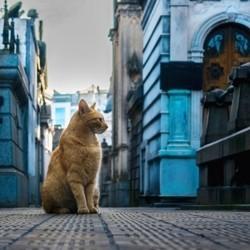 chat cimetière