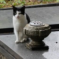 chat fidélité tombe mort
