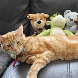 chat cleptomane et son butin