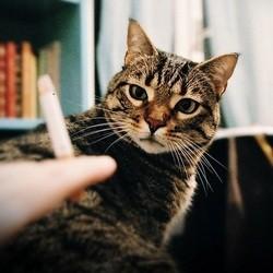 chat cigarette