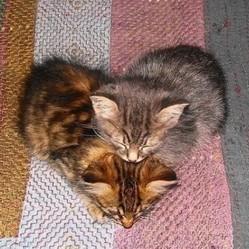 photos chat chien coeur saint valentin