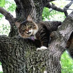 chat coincé dans un arbre sauvé par un adolescent