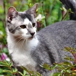 dangers chat extérieur jardin