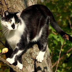 un chat et un policier coincés dans un arbre