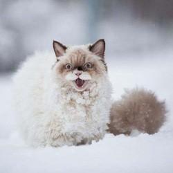 un chat découvre la neige