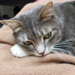 chat déprime dépression hiver stress luminothérapie