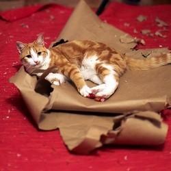 chat destructeur