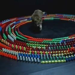 le chat et les dominos