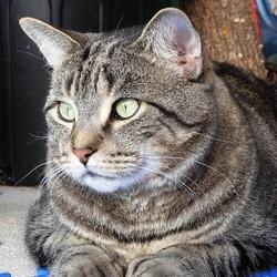 chat donneur sang